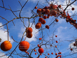 秋,柿,秋空