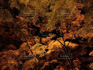 風景,秋,紅葉,ライトアップ,秋空