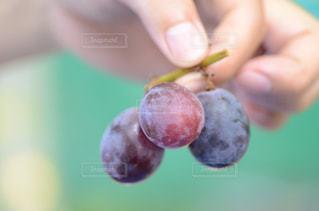 秋,果物,ブドウ,山梨,勝沼,食欲の秋,ピオーネ