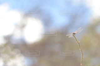 トンボ,蜻蛉,北杜市,アキアカネ,もえぎの村