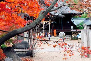 木の前のベンチに座っている人の写真・画像素材[1647851]