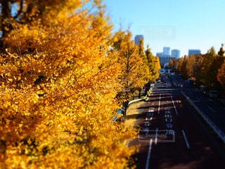 秋,紅葉,屋外,黄色,道路,景色,樹木,都会,イチョウ,銀杏,いちょう並木,いちょう