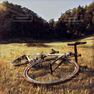 自然,アウトドア,サイクリング,林道
