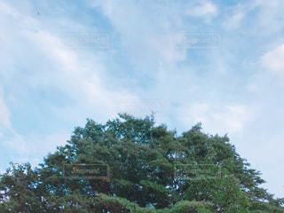 空,屋外,秋空