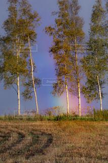 虹の写真・画像素材[1542181]