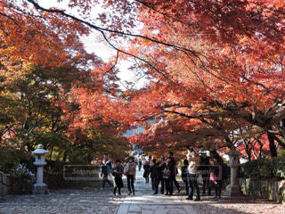 風景,空,秋,紅葉,京都,秋空
