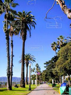 自然,海外,アメリカ,旅行,旅,LA,beach,カリフォルニア,nature,レジャー・趣味