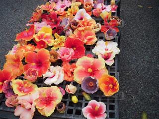 ハワイのマーケットに売ってたflowerの写真・画像素材[1538002]