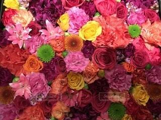 花の写真・画像素材[1576719]