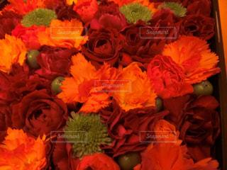 花の写真・画像素材[1577565]
