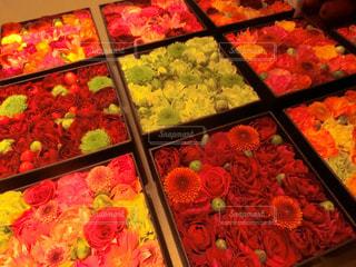 花の写真・画像素材[1577580]