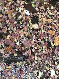 近くの花のアップの写真・画像素材[1607059]