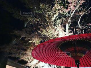 北野天満宮の写真・画像素材[1607398]