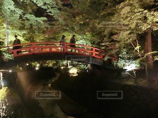 風景,橋,屋外,京都,緑,ライトアップ,北野天満宮,明るい,多色