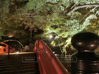 風景,橋,紅葉,屋外,京都,緑,赤,もみじ,樹木,ライトアップ,北野天満宮,明るい,草木,カエデ,多色