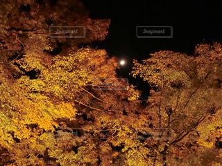 紅葉と月の写真・画像素材[1627764]