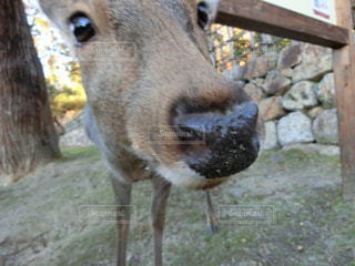 鹿の写真・画像素材[1638383]