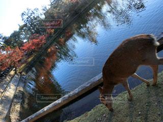 水の動物の写真・画像素材[1638405]