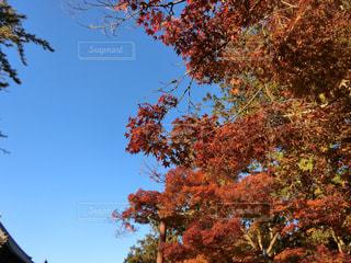 大きな木の写真・画像素材[1651271]