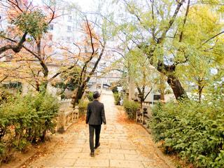 木の隣に歩道を歩いて男の写真・画像素材[1651820]
