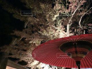 和傘と紅葉の写真・画像素材[1666092]