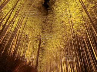 嵐山の竹林の写真・画像素材[1666127]