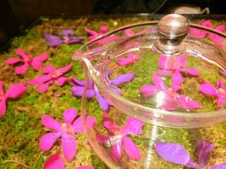 テーブルの上のピンクの花の写真・画像素材[1786650]