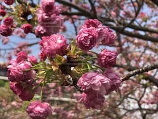 近くの植物にピンクの花のアップの写真・画像素材[1826104]