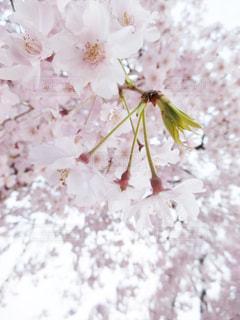 近くの花のアップの写真・画像素材[1832875]
