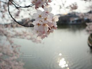 春の写真・画像素材[1984546]