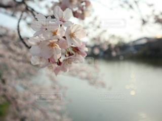 花の写真・画像素材[1984559]