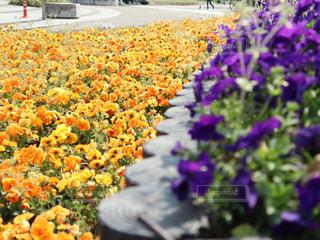 花の写真・画像素材[1984704]
