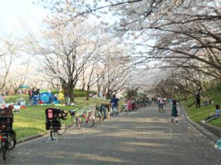 公園の写真・画像素材[2000968]