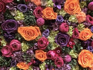 花の写真・画像素材[2009547]