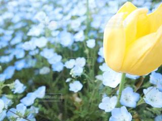 花の写真・画像素材[2051948]