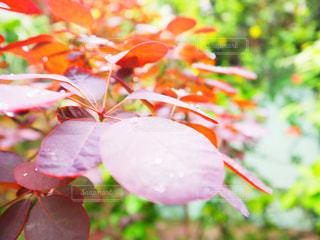 植物,葉っぱ,水滴,葉,雫,みどり,しずく