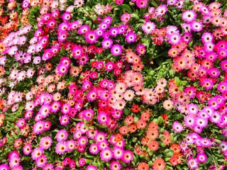 花のクローズアップの写真・画像素材[2121604]