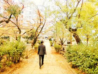 男性,風景,秋,屋外,後ろ姿,男,樹木,人物,背中,人