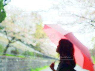 女性,風景,空,雨,傘,ピンク,女,見上げる,樹木,人物,人,あめ,梅雨,折り畳み傘