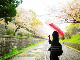雨の写真・画像素材[2168813]