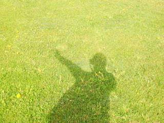 緑の野原のクローズアップの写真・画像素材[2260949]