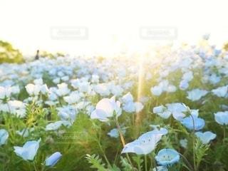 花の写真・画像素材[2651918]