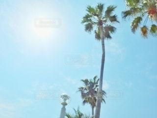 空の写真・画像素材[2675449]