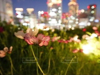 花をクローズアップするの写真・画像素材[2791560]