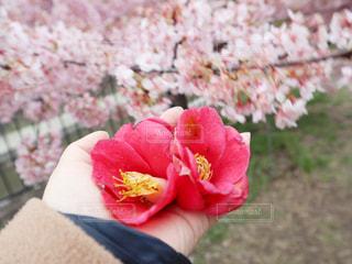 花をクローズアップするの写真・画像素材[2812464]