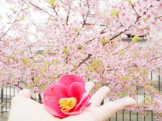 花を持つ人の写真・画像素材[2812465]