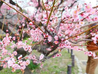 植物の上のピンクの花の写真・画像素材[3016680]