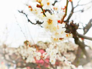 花のクローズアップの写真・画像素材[3016681]