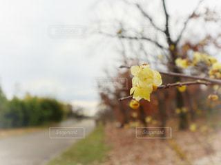 黄色い花の写真・画像素材[3016696]