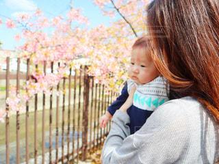 子ども,2人,桜,親子,花見,サクラ,お花見,人,赤ちゃん,ママ,河津桜,さくら,だっこ,淀水路
